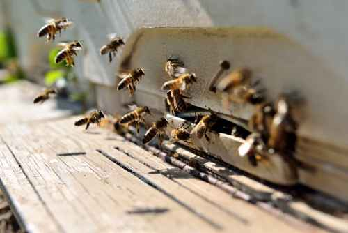 Let Buckmaster deal with unwanted bees
