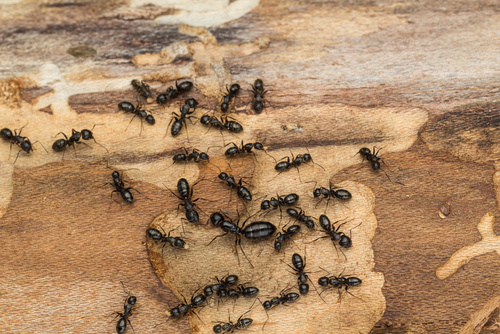 Got ants? We can help